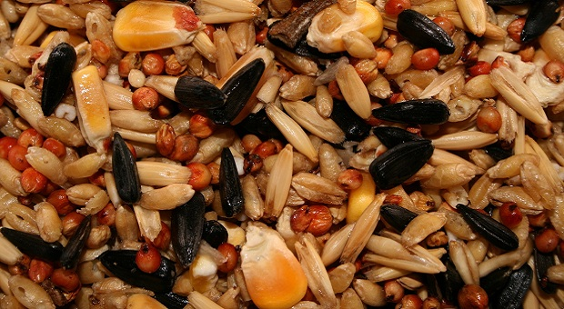 Mix of seeds to save for survival purposes