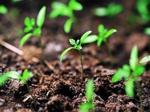 Details of seedlings