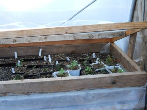 hot bed greenhouse