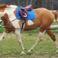 White and brown horse