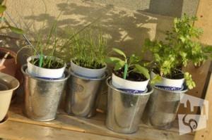 urban container gardening