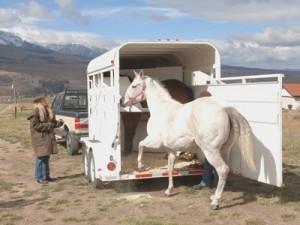 horse trailer accessories