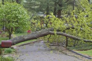 Tree Falls Across Street
