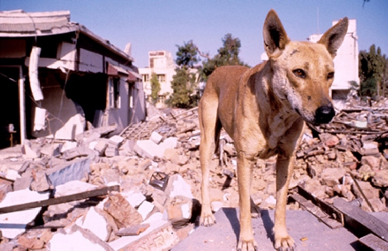 Animals Sense Natural Disasters
