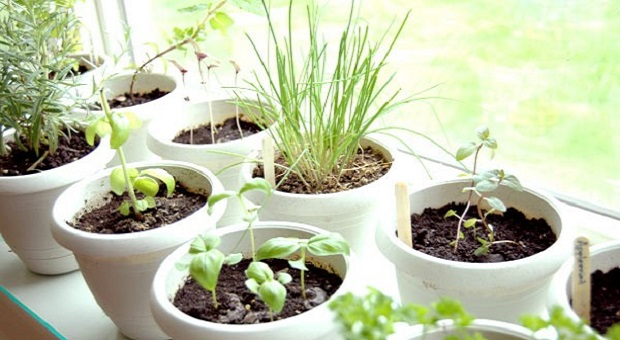 4 Edible Plants To Grow Indoors | Survivopedia