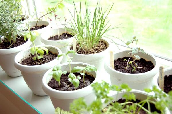 herb indoor garden