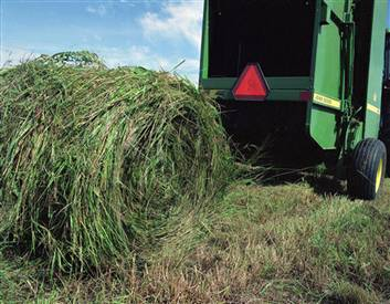switchgrass_harvest