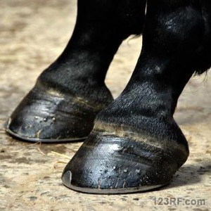 Survivopedia_shoe horse