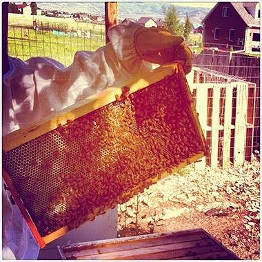 Survivopedia Beekeeping Food