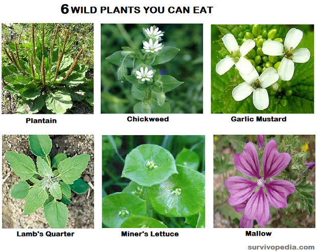 6 EDIBLE PLANTS