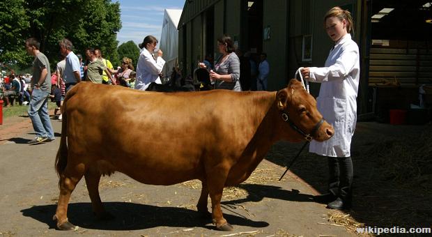 Survivopedia Animals to Raise for Milk