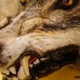 Survivopedia Animal Bites