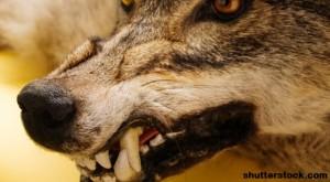 Emergency Medicine: Treating Animal Bites Correctly