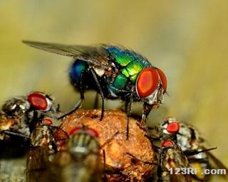 Survivopedia Kill Flies
