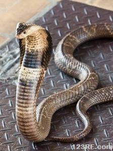 Survivopedia Snakes as spooky pets