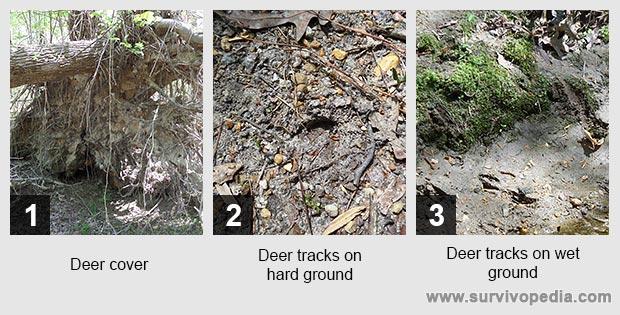 Deer cover Deer tracks on hard ground Deer tracks on wet ground