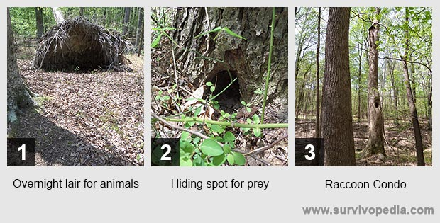 Overnight lair for animals Hiding spot for prey Raccoon Condo
