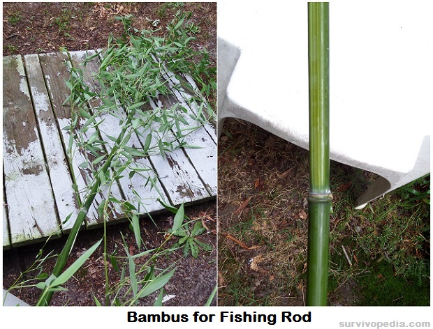 Survivopedia DIY Bamboo Fishing Rod