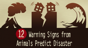 12 Animals Signs Which Save You From Disaster