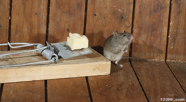 8 Tips to Keep the Mice Out of the Stockpile | Survivopedia