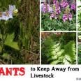 big_50 PLANTS