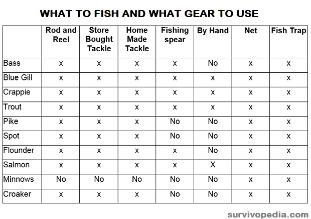 what to fish