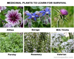 Top 30 Medicinal Plants To Learn For Survival