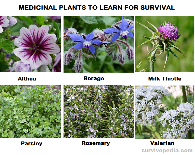 med plants