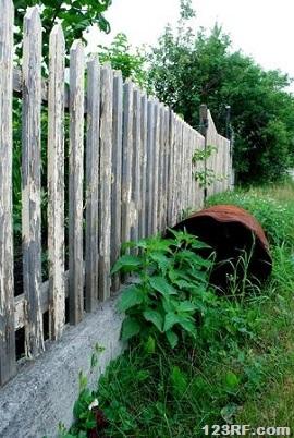 Fence nettle