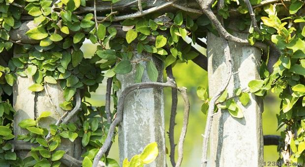 Los mejores arbustos para la privacidad