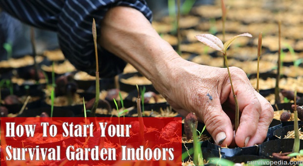How to start your survival garden indoors survivopedia workwithnaturefo