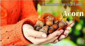 Uncommon Survival Foods – Acorn