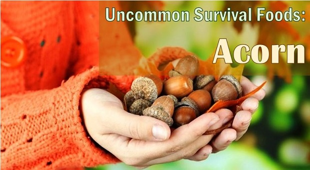big acorn
