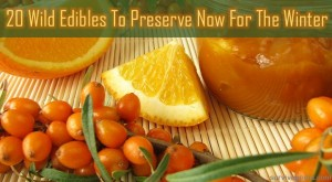 20 Wild Edibles To Preserve For Winter