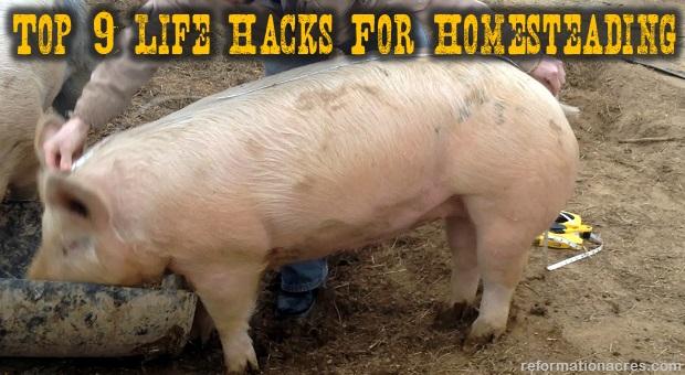 Measuring Pig