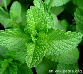 Mint leaves detail