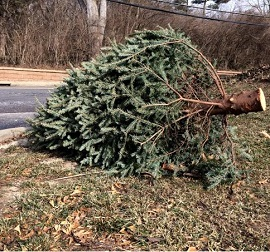 Christmas tree tossed on the road