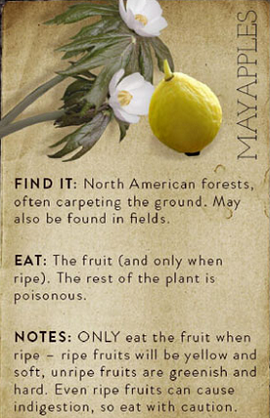 May apples flowers and fruit