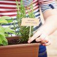 Woman growing herbs indoors