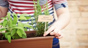 Prepper's Garden: How To Grow Herbs Indoors