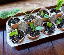 start plants in eggshell