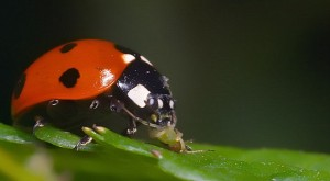 The Useful Bugs In Your Garden