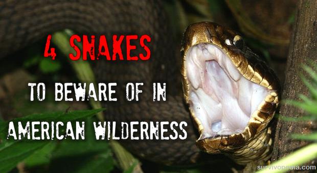 Snakes in America