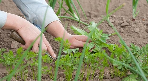 Natural Weeds Control