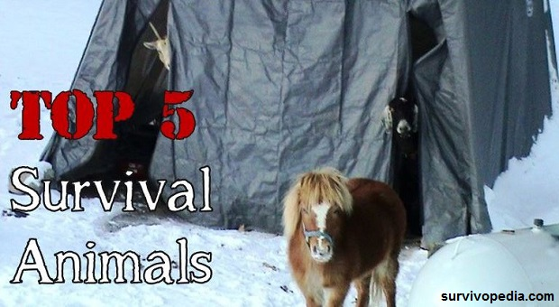 survival horses and goats