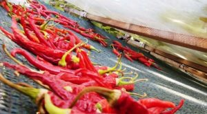 How To Grow and Preserve Peppers
