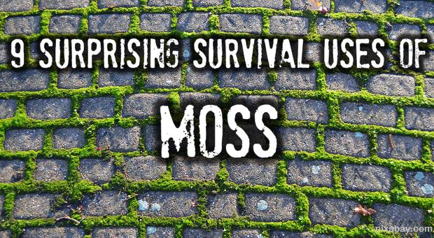 Survival moss