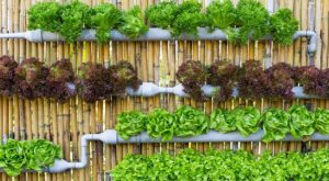 Vertical Gardening: Growing Food in Small Spaces