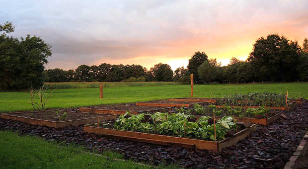 13 Tips For Building The Best Raised Beds