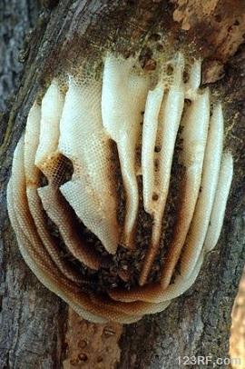 wild hive